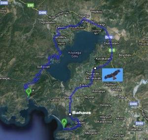 Location of Black Kite