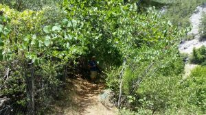 Shady undergrowth leading down to Geyik Canyon